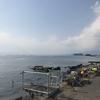 獅子浜でダイビングしてきました