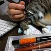 日記を書くのを邪魔する猫。