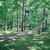 *近所の森公園で手作りバインミー*