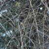 今年初探鳥・早戸川林道の野鳥/2019-01-02
