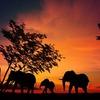 アフリカ旅行で危険を避けて最高の旅を実現する5つのポイントを、元アフリカ在住者が解説する