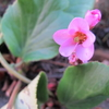 この花の色
