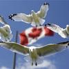 ワーキングホリデーでカナダをおすすめする理由。