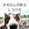 子犬のムダ吠え|吠える原因としつけ方法をドッグトレーナーが教えます