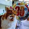 雑種の『ラッブル』が推定30歳の誕生日を迎える!高血圧のために定期的な治療薬が必要だが、元気でまだ長生きしそう!!