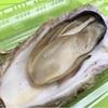 浦和 真牡蠣 蒸し2