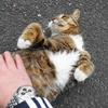 4月前半の #ねこ #cat #猫 その1