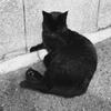 【禁酒日記】本屋めぐりと猫【101日】