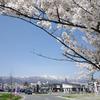 西置賜に桜を見に行ってきた2019