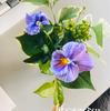 今日の花と現場
