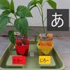 プランターで野菜栽培②  パプリカ栽培を植える編