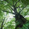 アボカドの種を植えると、どうなるか⁇