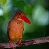 野鳥撮影のコツ!!鳥を撮るときに狙っていきたい仕草や行動をまとめてみた