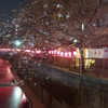 夜桜2017