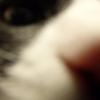 本日の猫様からのお告げ~11/8の星占い~