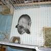 我が家のウサギさん20190109