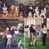 2017年4月16日 Wiz.dogClub関東ドッグダンス競技会に参加してきました♪