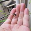 幼虫は順調に育っています。