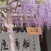 亀戸神社 ❁ 藤まつり