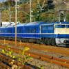12月17日撮影 東海道線 大磯~二宮間 リバイバル富士号試運転を撮る
