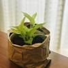 【0円リメイク】簡易な鉢カバーを作る。/観葉植物/再利用/紙袋/DIY