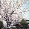 写ルンですを使って、桜の写真を魅力的に撮ろう