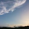 夕方の空とヒメジョオンたちと。