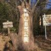 登山日記 part 2 『風神山〜真弓神社までトレッキング』