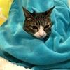 『着る毛布』にくるまる猫