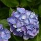 雨の前に7月の花を