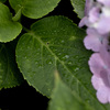 梅雨空の植物達