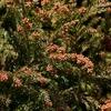 【ストナリニS】1日1回で驚きのコスパ!今年の花粉シーズンで使ってみた感想