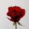 ☆ミニチュアの植物☆薔薇を作ろう🎵
