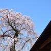 桜情報2018.3.30 沢谷前川桜と沢谷駅