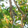 貝がら公園で野鳥撮影