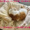 【猛省】ブログネタのために愛猫を犠牲にしてはいけないというお話。
