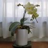小さな温室で開花を楽しむ  カトレア&蘭