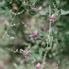 萩の花(清澄庭園にて)