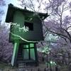 高遠城址公園の夜桜 まだまだ見頃です!