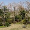 """再び春の嵐。 満開の桜は、""""散りはじめ""""に"""