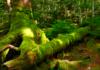 白駒池・苔の森