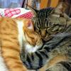 本当の猫の生活とは?1番大事なのは飼い主さんの愛情