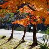 ウォーキングで紅葉の彦根城へ Part2 ~ 内堀 黒門付近~