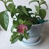 植木鉢にお花が咲きました