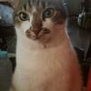 愛猫だった「りゅう」の命日
