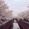練馬区を流れる石神井川沿いには公園がたくさん!穴場の水遊び場も♩東京都立石神井公園までお散歩してみよう!