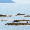 北極海の氷、最速で減少