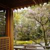 城南宮で椿や早咲きの梅を愛でる@2019