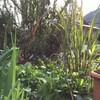 12月17日の庭