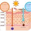ある程度の紫外線はアトピー  にいい影響をもたらす